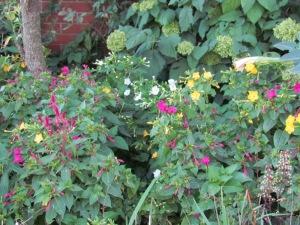 hydrangea, 4oclocks and celosia