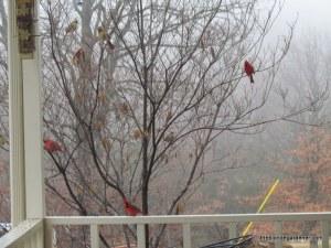 cardinals 1/1/13