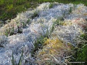 onions, mulch, paper