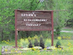 blossomberry nursery