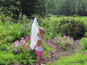 My full sun butterfly garden.  https://theblondegardener.com/2015/01/29/planning-your-garden-site/