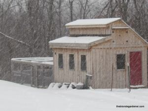 chicken coop in snow