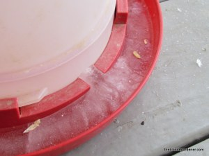 frozen chicken water