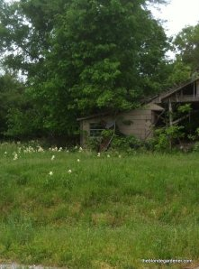 old house and iris2