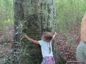 steele creek beech tree hallie
