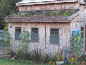 August 2014--Living roof on a chicken coop  https://theblondegardener.com/2015/08/01/chicken-coop-with-living-roof/