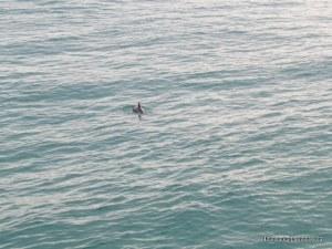 navarre dolphin