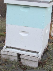 Winter is a time to conserve energy for the bee.  https://theblondegardener.com/2015/01/17/winter-and-bees/