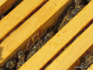 Busy spring bees  https://theblondegardener.com/2015/05/09/bee-update/