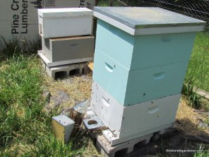 expanding the bee hives in spring   http://theblondegardener.com/2015/05/09/bee-update/