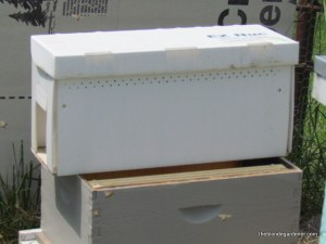bee nuc box with awaiting hive body  http://theblondegardener.com/2015/05/09/bee-update/