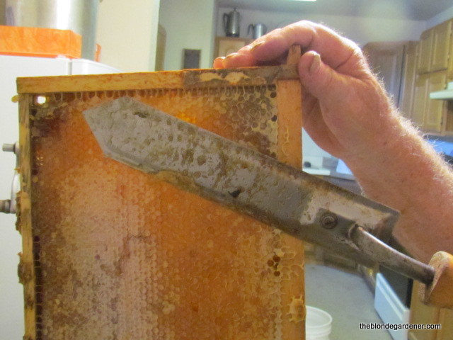 Removing beeswax capping is the first step to harvesting honey. https://theblondegardener.com/2017/07/23/minding-my-own-beeswax/