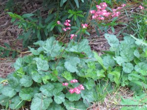 Heuchera is a native plant great for part shade.  http://theblondegardener.com/2015/06/19/im-beginning-to-mold/