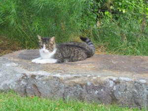 Garden guard kitty  http://theblondegardener.com/2015/06/19/im-beginning-to-mold/