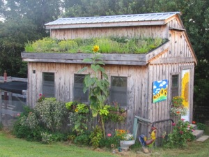 July 2015--chicken coop with a living roof  https://theblondegardener.com/2015/08/01/chicken-coop-with-living-roof/