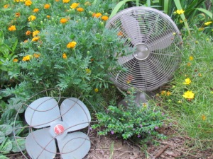 marigolds and fans