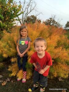 hallie and luke october 2015 amsonia hubrectii