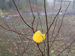lone leaf in fall