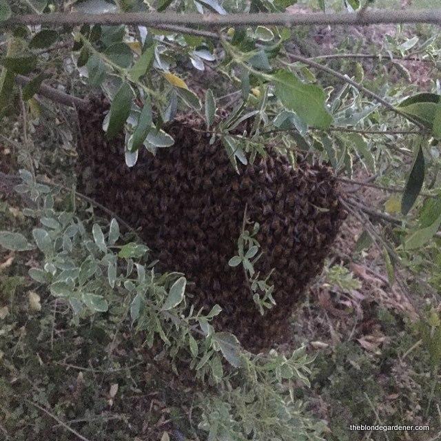 bee swarm3
