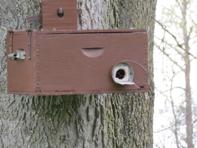 Swarm trap place in a tree to entice ferral swarms of bees.