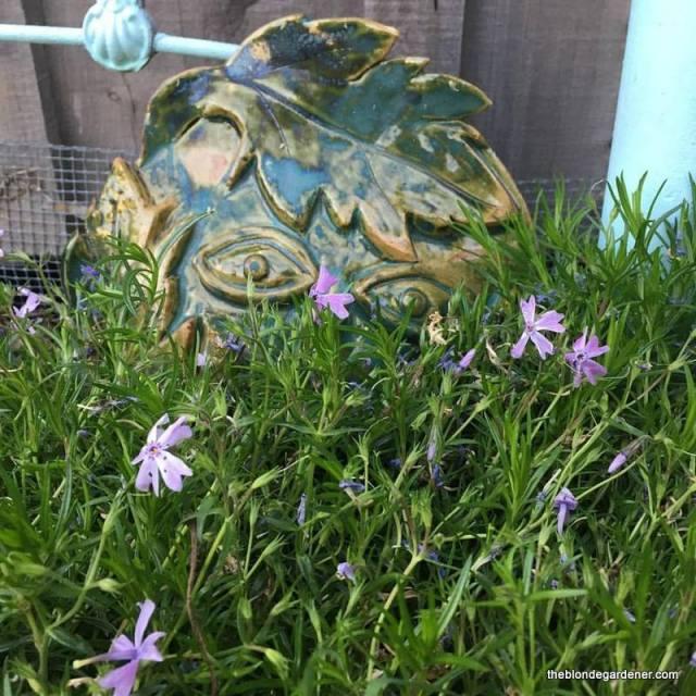 Garden fairy face peeking through the creeping phlox
