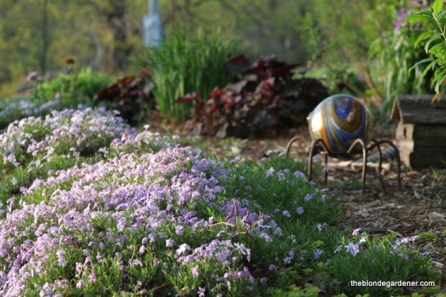 Creeping phlox is one of the earliest blooming perennials in my garden. https://theblondegardener.com/2017/04/23/spring-has-sprung/
