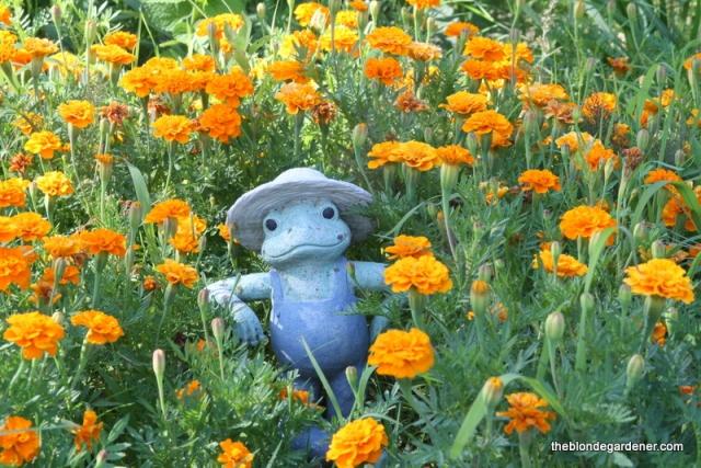 Marigold farmer