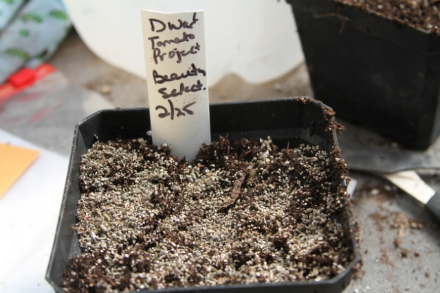 It's important to start seeds and transplants off with a good growing mix. Don't forget to label! https://theblondegardener.com/2018/03/11/how-to-start-tomatoes-from-seed/